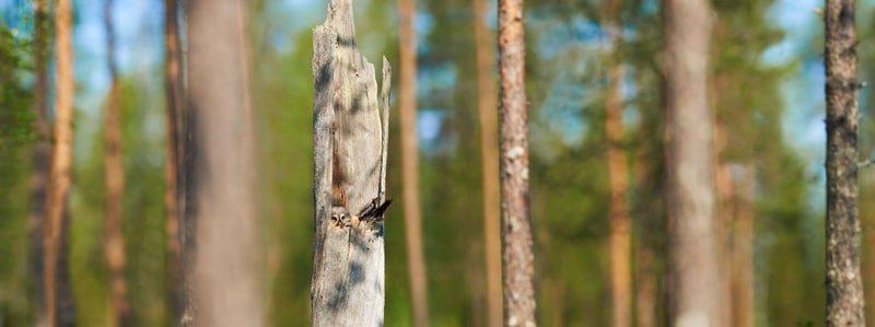 Lapinpöllö, quadriptych 4x 125x188cm, Ed. 3+1