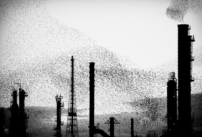Refinery Flocks - Triptych panel 02, 150x100cm, Ed. 5+1