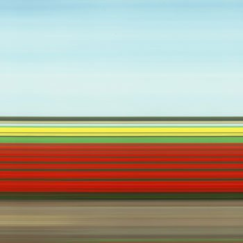 Travelling Still, Tulip Fields IV
