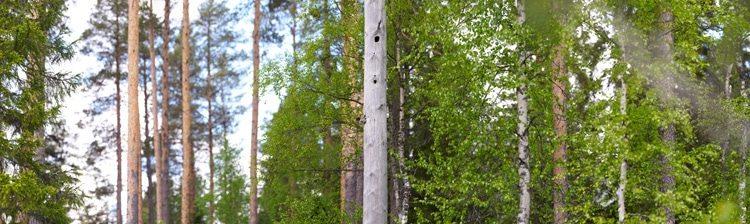 Telkkä, 300x89cm, Ed. 5+1