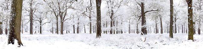 Winter Woodland, 2008. edition of 15
